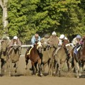 10 go to the gate in Saturday's $600,000 Woodward at Saratoga (photo credit: © Cheryl Quigley | Dreamstime.com)