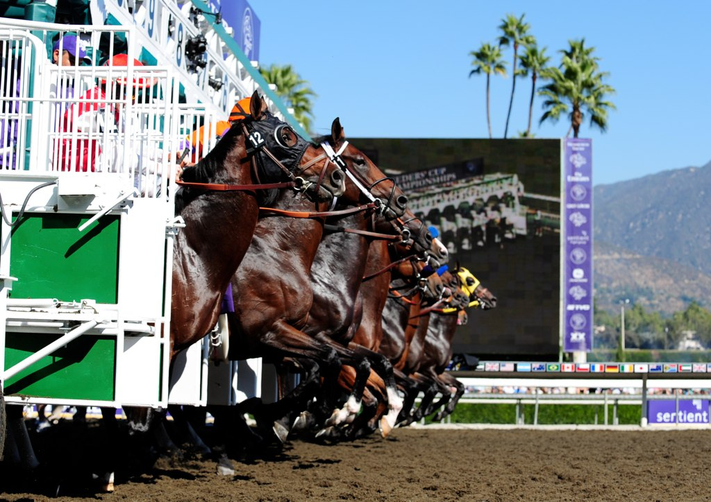Breeders Cup Wagering Odds Game On Dude Royal Delta