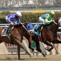 A field of eight will line up in Saturday's $100,000 Alex M. Robb at Aqueduct. (photo credit: bigstock.com)