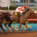 A field of six line up at Gulfstream Park in the $350,000 Holy Bull (G3) at Gulfstream Park. (Photo: Gulfstream Park)
