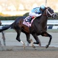 The undefeated Verrazano is going to be the likely betting favorite for the Kentucky Derby (Photo credit: Churchill Downs)
