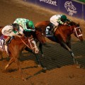 Mucho Macho Man wins the 2013 Breeders' Cup Classic by a nose (Photo credit: Breeders' Cup Ltd)