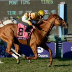 Wise Dan is the headliner on Saturday which features six Breeders' Cup Challenge races. (photo credit: Breeders' Cup Ltd.)
