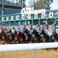 Eight Derby hopefuls will head to the gate in Saturday's Rebel at Oaklawn Park. (photo credit: Oaklawn Park)