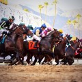 Eight go to the post in Saturday's Grade 3 Sham, a Derby points race.  (Photo credit santaanita.com)