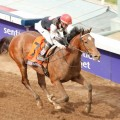 Breeders' Cup Juvenile champ Texas Red is 12-1 in Derby betting. (Photo credit: Breeders' Cup Ltd.)