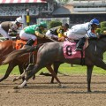 A field of seven fillies line up in the Spinaway at Saratoga. (photo credit: © Wingbeats551 | Dreamstime.com)