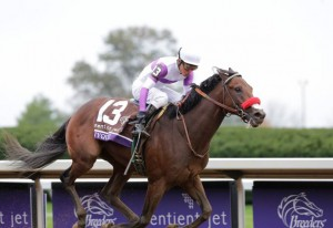 The Doug O'Neill trained Breeders' Cup Juvenile champion Nyquist heads to Louisville as the favorite for the Kentucky Derby(Photo credit: Breeders' Cup Ltd.).