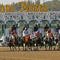 A field of nine line up in Saturday's Santa Monica (G2) at Santa Anita. (Photo credit: © Cheryl Quigley | Dreamstime.com)