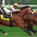 Who are the top five race horses of all time?