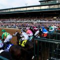 185 horses were entered in the 2016 Breeders' Cup, 13 championship races at Santa Anita. (Photo credit: Breeders' Cup Ltd. ).