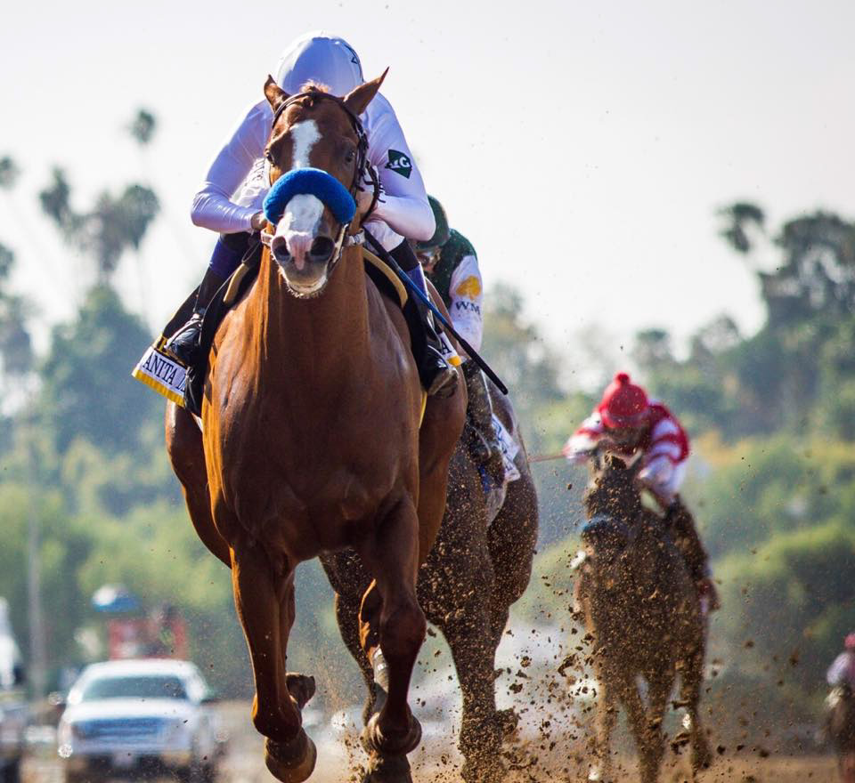 Justify 3 1 Favorite In Kentucky Derby Future Wager