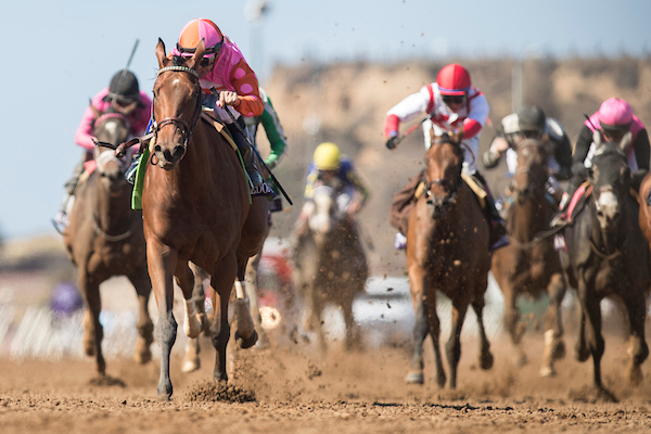 Breeders Cup Juvenile Fillies Betting Odds Turfnsport Com